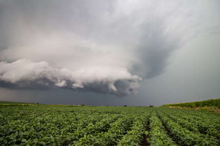 A ragged storm cloud hovers over soybean fields in the midwestern United States.