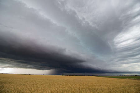 A line of heavy thunderstorms fills the sky over a wheat field in eastern Colorado. Stock Photo