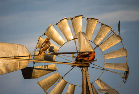 A hawk perches on an old windmill on a sunlit evening. Stock Photo