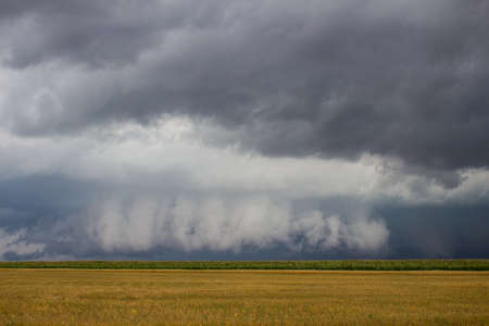 A supercell thunderstorm with a low hanging wall cloud looms on the horizon over a cornfield.