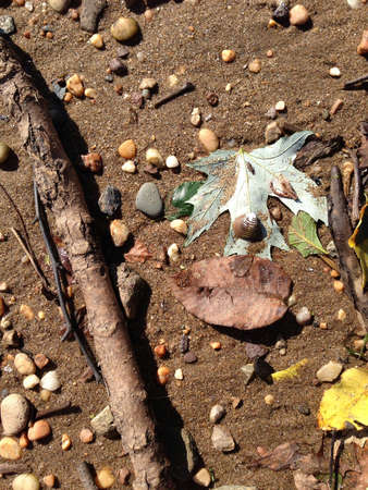 Sand and debris at the beach.