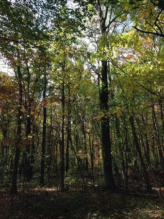 Beautiful forest landscape.