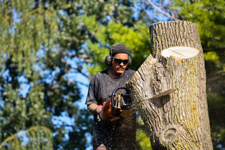 A man with a chainsaw cuts through a large tree trunk, with softly focused background of trees and sky
