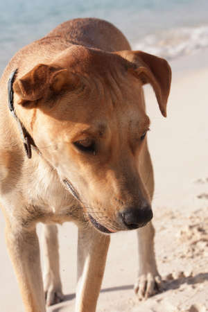 A dog looks curiously at something he sees in the sand off camera