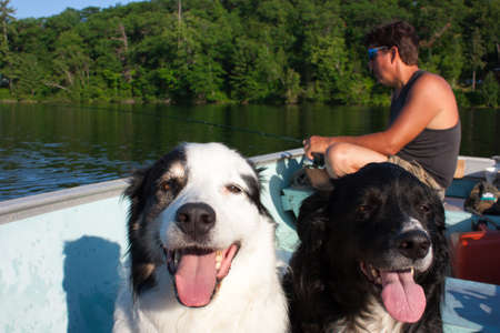 Close up on two dogs sit in a fishing boat on a lake  with a man fishing at the back of the boat.