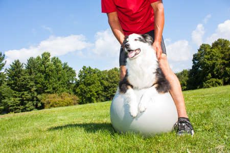 A dog owner helps his dog with stretching tecniques on a Yoga ball in the park.  Great to help older dogs maintain healthy joints and flexibility.