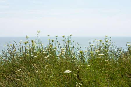 wild field flowers blow gently in the wind on Lake Erie
