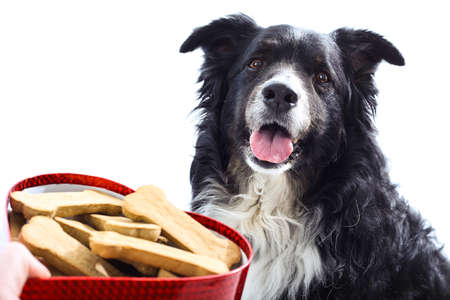 A hand holds a heart shaped box of treats outstretched towards a cute happy dog.  isolated on white. photo