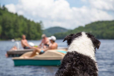 A wet dog sitting on the cottage dock watches people swimming and boating on Lake of Bays in Muskoka Ontario Canada photo
