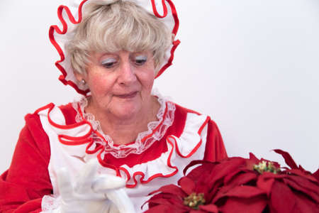 mrs santa claus: Mrs Santa Claus looking after a Christmas poinsettia