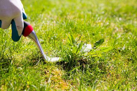 잔디 잡초를 손으로 잡아 당기기 위해 잡초 잡아 당김 도구 사용