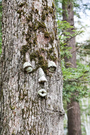 face in tree bark: time for a facelift?  If the tree could talk, I wonder what it would say.