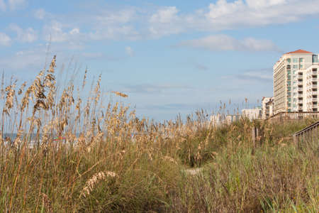 grand strand: The graasy dunes along the edges of the sandy beaches  of Myrtle Beach South Carolina Stock Photo
