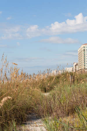 grand strand: Grassy sand dunes run along the beach front of Myrtle Beach