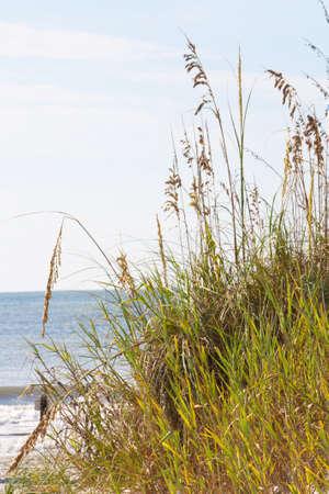 Characteristic grasses along the shoreline at Myrtle Beach South Carolina.