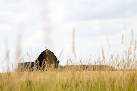 canada agriculture: A black bank barn stands in a foreground of field Stock Photo