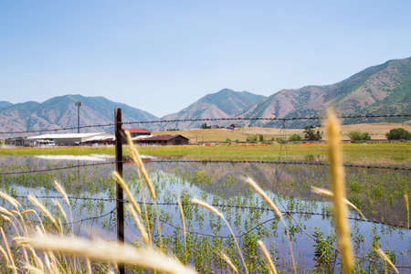 forground: mountains reflecting in the water on Utah farmland. Field grasses in forground