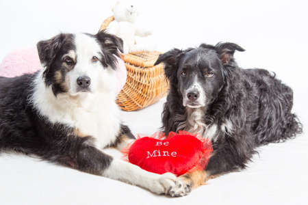 manos sosteniendo: Two dogs holding paws with a valentines heart Foto de archivo