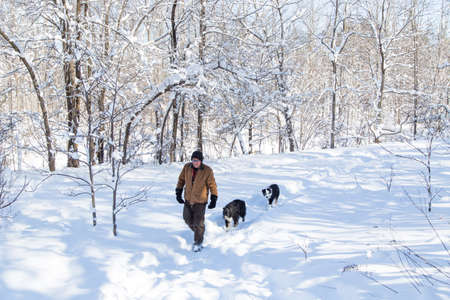 blanketed: A man and his two dogs walking through a forested winter wonderland blanketed in snow