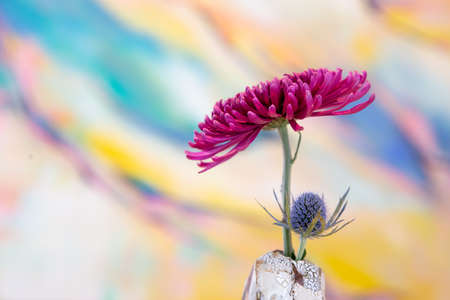 Flower in rustic white vase on colored background