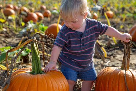 Baby boy choosing a pumpkin in the pumpkin patch Standard-Bild