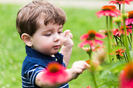 little boy playing picking a flower in the garden
