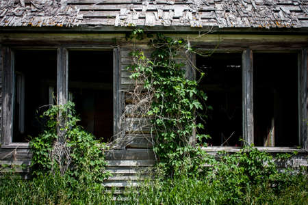 Ivy and weeds overgrowing an old wood clad homestead