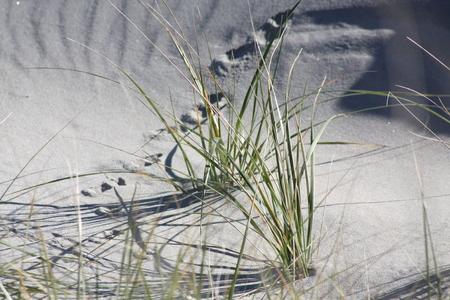 vogelspuren: Vogel-Tracks Lizenzfreie Bilder