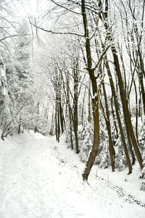 Road at snowbound winter forest in overcast. Beautiful winter landscape. Stock Photo