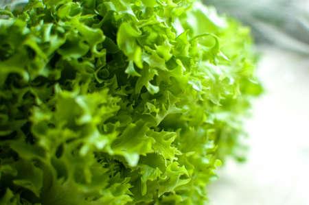 Bunch of raw organic green frisee salad close up. Selective focus. Stock fotó