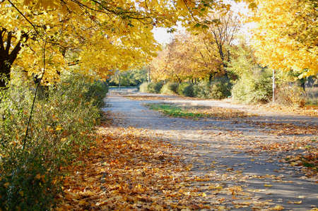 Path at the beautiful autumn park. Tranquil autumn mood