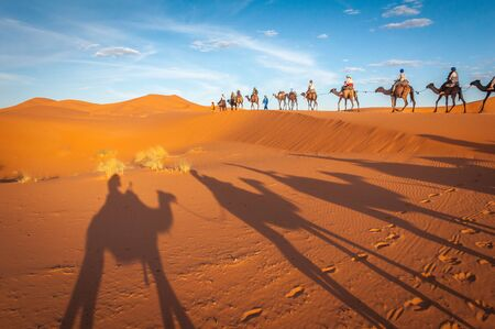 Sahara desert camels trekking tours with berbers adventure dromadaires riding and berber guiding excursion