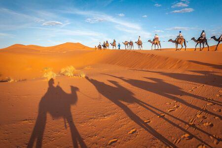Sahara desert camels trekking tours with berbers adventure dromadaires riding and berber guiding excursion Stock Photo