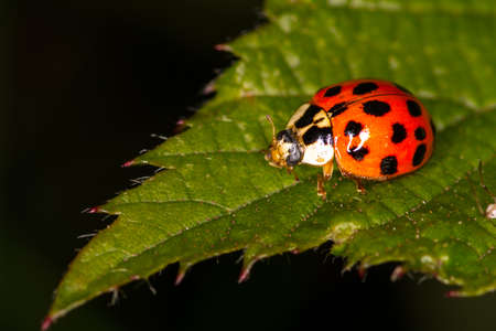 scrambling: Ladybird scrambling in the bushes