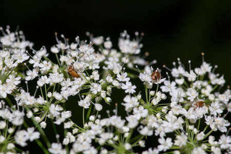 Common Yarrow growing in the forest and the meadow photo