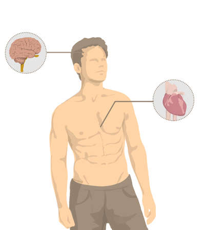 Illustration of shirtless man with the main organs of the human body, heart, brain, intestine, stomach, lungs Illustration of shirtless man with muscles and human proportions Banco de Imagens - 119398345