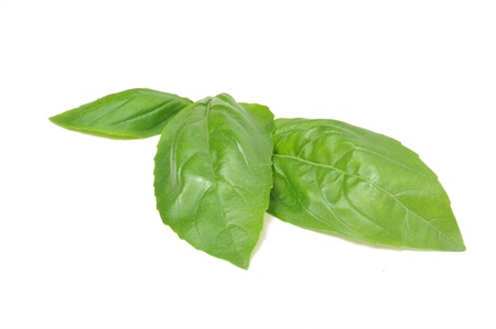 Basil leaves isolated on white background.