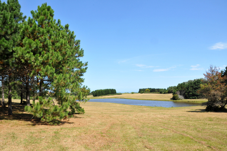 Summer meadow with pines and lake on background