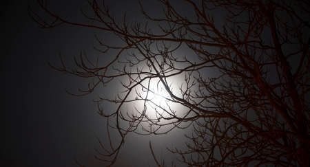 full moon effect: Picture of moon through trees in winter