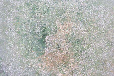 meadow flower pattern background