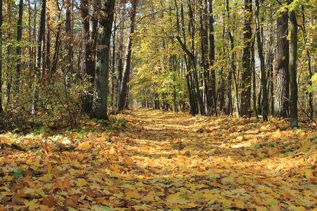 autumn Фото со стока - 36513975