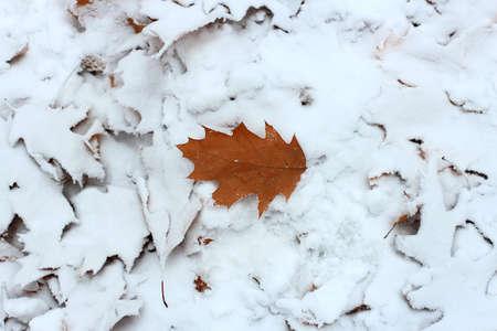 whiteness: first snow