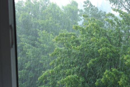 tempest: hurricane