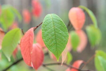 leafs: leafs Stock Photo
