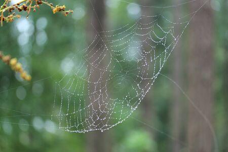 spiders web: spiders web Stock Photo