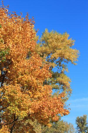 paints: autumn paints