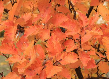 homosexuales: hojas de otoño