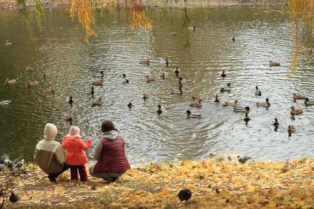 feed: ducks, feed Stock Photo