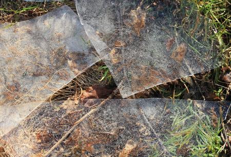 shards: shards of ice