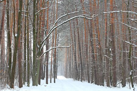 winter road: winter road, Stock Photo